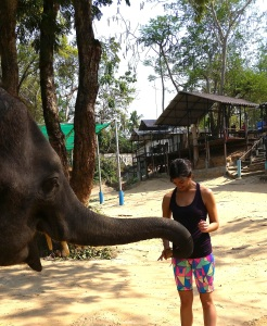 Meeting and feeding Apple, a 22 year-old Thai elephant who is incredibly happy.  Elephants sway/wag their heads back and forth to express happiness.