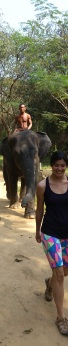 It's difficult letting an elephant follow you.  They are deceivingly fast!
