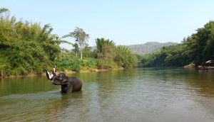 The beautiful outdoors of rural Thailand.
