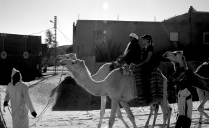 b&w camel ride