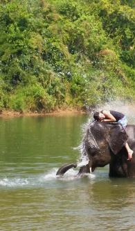 Elephant hugs.